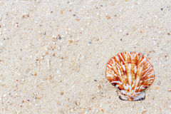 Shells on sandy beach Royalty Free Stock Photography