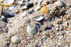 Shells, Scallops, Nerite, Cone on the Beach Royalty Free Stock Photography