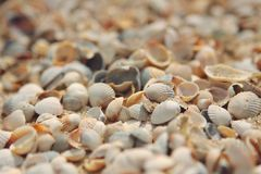 Shells Sea of Azov in Berdyansk. Ukraine Royalty Free Stock Photos