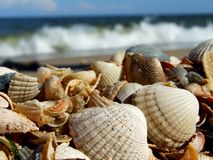 Shells on the sea background Royalty Free Stock Photos