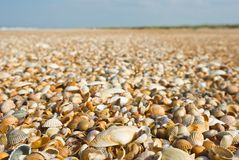Shells on a sea coast Stock Photography