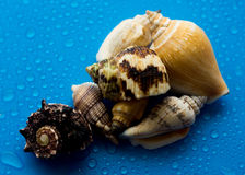 Shells from the sea Stock Image
