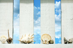 Shells at sea on the fence on beach Stock Images