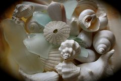 Shells and Sea glass. Multi white shells and sea glass in a pearl shell. Perfect for a coastal setting Stock Image