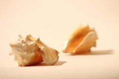 Shells of sea III Royalty Free Stock Images