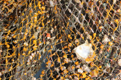 Shells and sea life with the net. Royalty Free Stock Photos
