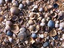 Shells of the sea of. The picture was taken on the shore of the Azov sea during a holiday in the city Royalty Free Stock Images