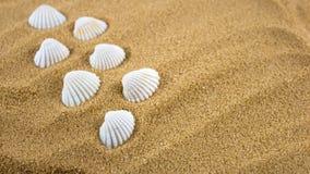 Shells. Sea shells placed on sand Stock Photos