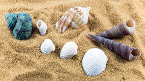 Shells. Sea shells placed on sand Royalty Free Stock Photo