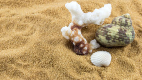 Shells. Sea shells placed on sand Stock Photography