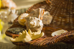 Shells and sea star in basket Stock Images