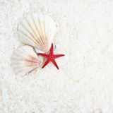 Shells and sea star composition Royalty Free Stock Images