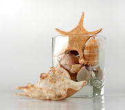 Shells and sea star in glass Stock Photos