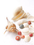 Shells - sea still life. Collecting shells - A high key still life image of a pretty assortment of big and little seashells, of varying shapes and sizes, in Stock Photo