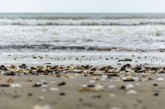 Shells and sea. Sea waves and shells on the shore Stock Photo
