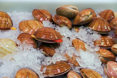 Shells seafood Royalty Free Stock Photo