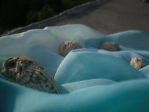 Shells Stock Image