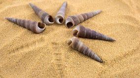 Shells. Seashells on the sand on the seashore Stock Photography