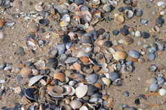 Shells. Seashells on a sandy beach Royalty Free Stock Photos