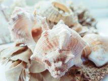 Shells & seaweed. Close up on a white background Royalty Free Stock Photography