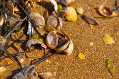 Shells and seaweeds Stock Image