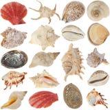 Shells-set Stock Photography