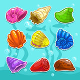 Shells set Royalty Free Stock Image