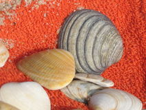 Shells. Several shells on an orange towel near the Atlantic sea. Ones very hot summer day Stock Images