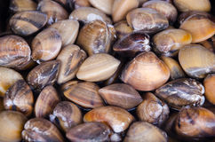Shells. Fish in market for sell Royalty Free Stock Images