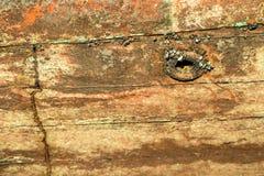 Shells on the ship wall Stock Image