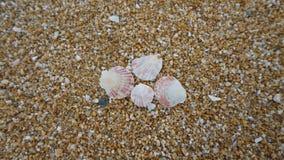 Shells On Shore Stock Photos