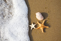 Shells on the shore Stock Images