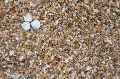 Shells on the shore Stock Photos