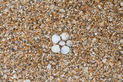Shells on the shore Royalty Free Stock Image