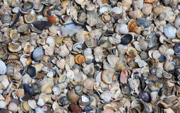 Shells on the shore of the beach Stock Image