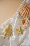 Shells on silk Royalty Free Stock Photos