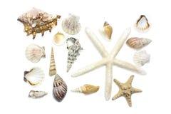 shells sjöstjärnan Royaltyfria Bilder