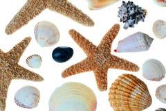 shells sjöstjärnan royaltyfria foton