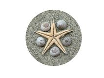 shells sjöstjärnan Royaltyfri Bild