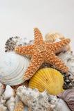 shells sjöstjärnan Arkivbild