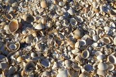 Shells sluiten omhoog Stock Afbeeldingen