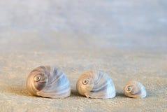 shells snailen Arkivfoton