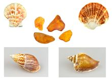 Shells, snails and amber Stock Images