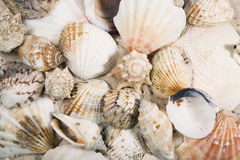 Shells and snails background Stock Photos