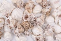 Shells. Some shells as a background Stock Images