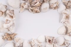 Shells. Some shells  frame on a white background Stock Images