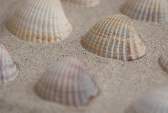 Shells. Some simple sea shells arrived at shore Stock Images