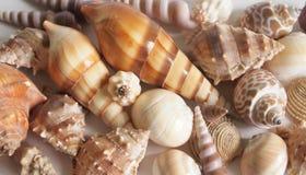 Shells. Some shells on white background Stock Image