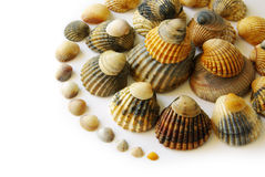 Shells Spiral Royalty Free Stock Image