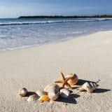 Shells square Royalty Free Stock Photo